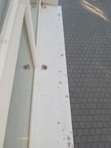 Замърсени перваз и прозорец.