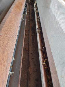 Замърсени дограми на прозорци.