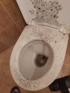 Замърсена при строителни дейности тоалетна чиния.